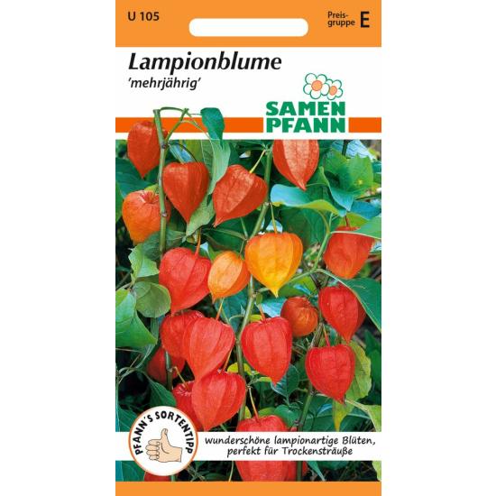 Lampionblume (Physalis)
