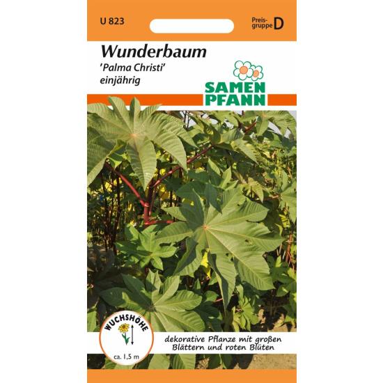 Wunderbaum (Ricinus), Palma Christi