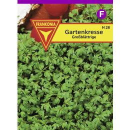 Gartenkresse, großblättrige, Großpackung