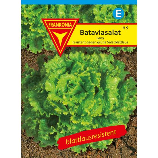 Bataviasalat, Leny