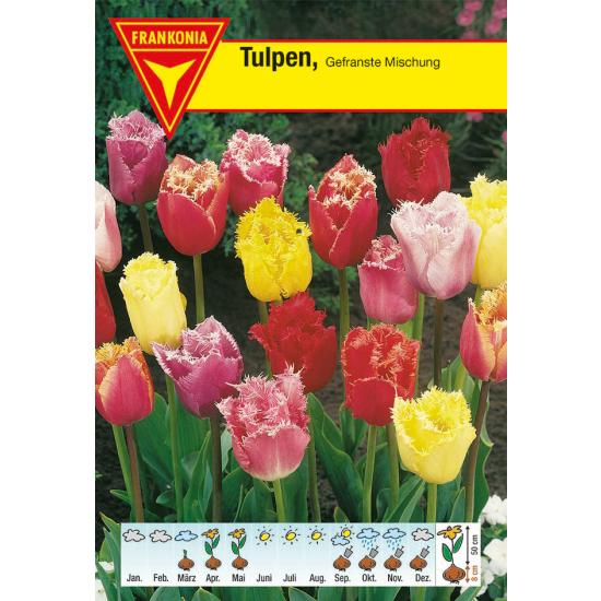 Gefranste Tulpe, Mischung