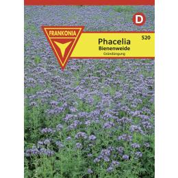 Phacelia, Bienenweide Portion für 10 m²