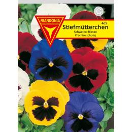 Stiemütterchen, Schweizer Riesen Prachtmischung
