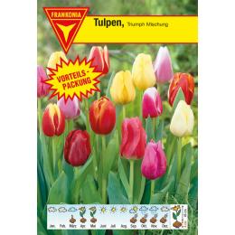 Triumph Tulpe, Mischung Vorteilspackung