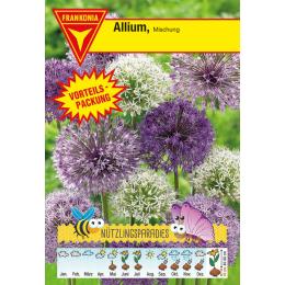 Allium, Mischung, Vorteilspackung