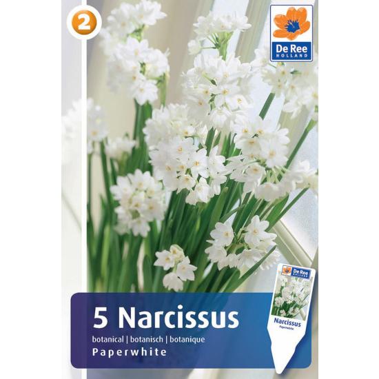 Botanische Narzisse, Paperwhite (Weihnachtsnarzisse)