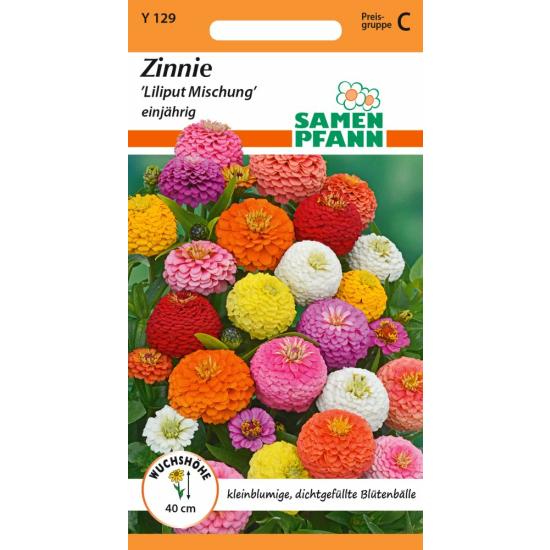 Zinnie, Lilliput Mischung