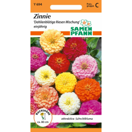 Zinnie, Dahlienblütige Riesen Mischung