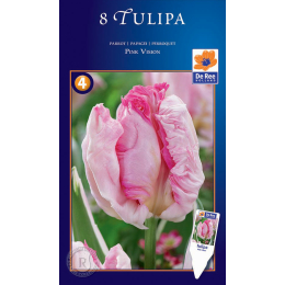 Papagei Tulpe, Pink Vision