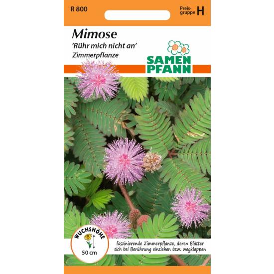 Mimose, Rühr mich nicht an