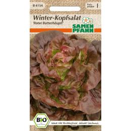 Winter-Kopfsalat Roter Butterhäuptl, BIO