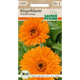 Ringelblume Erfurter orange, BIO