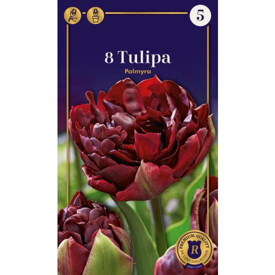 Gefüllte frühe Tulpe, Palmyra