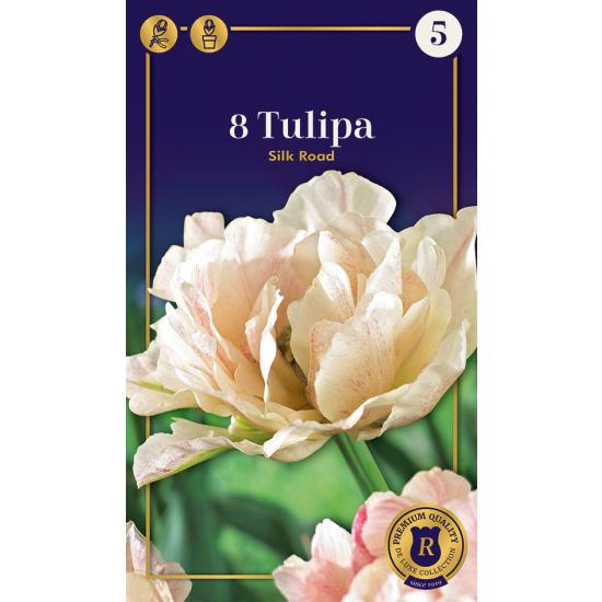 Gefüllte späte Tulpe, Silk Road