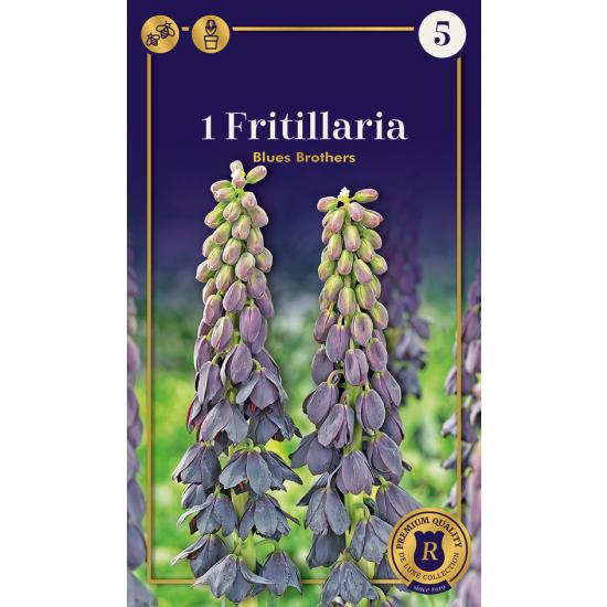 Fritillaria, Blues Brothers