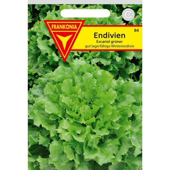 Endivie, Winter-, Escariol grüner