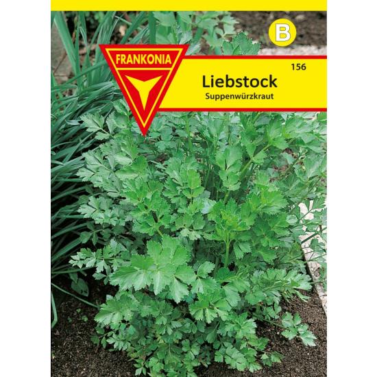 Liebstock, Maggikraut