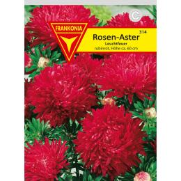 Rosen-Aster, Leuchtfeuer
