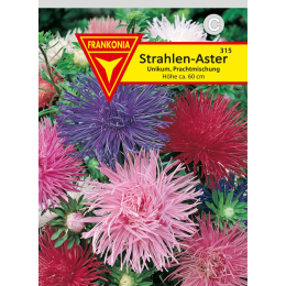 Strahlen-Aster, Prachtmischung