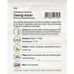 Zwerg-Aster, Prachtmischung