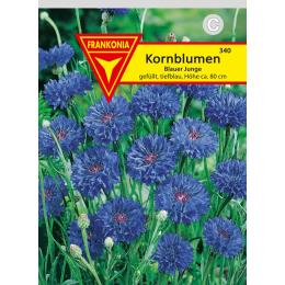 Kornblume, Blauer Junge