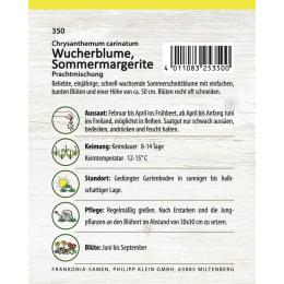 Wucherblume, Sommermargerite, Mischung