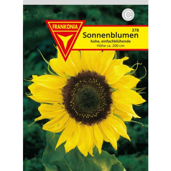 Sonnenblume, gelb