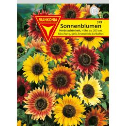 Sonnenblume, Herbstschönheit