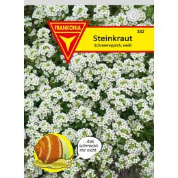 Steinkraut (Lobularia), Schneeteppich