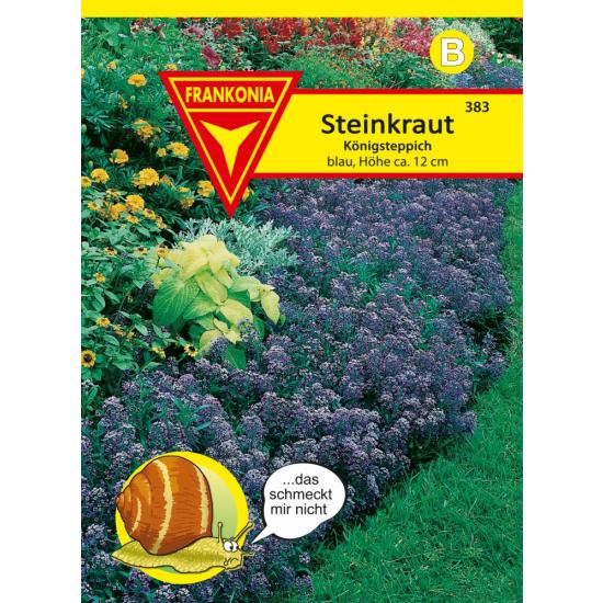 Steinkraut (Lobularia), Königsteppich