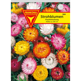 Strohblume, Prachtmischung