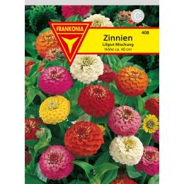 Zinnie, Liliput
