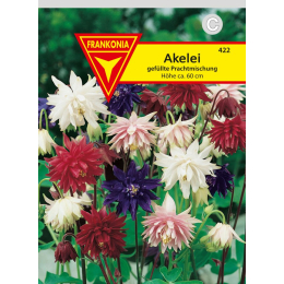 Akelei (Aquilegia),  gefüllte Mischung