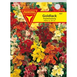 Goldlack, einfache Prachtmischung