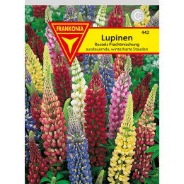 Lupine, Russels Mischung