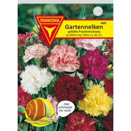 Gartennelken, gefüllte Prachtmischung
